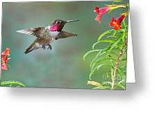 Annas Hummingbird Greeting Card