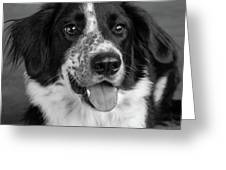 Portrait Of A Border Collie Mix Dog Greeting Card