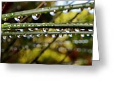 Raindrops On Bamboo Grass Greeting Card