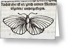 1683 Maria Merian Black Veined White Greeting Card