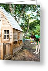 A Backyard Chicken Coop In Austin Greeting Card