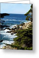 17 Mile Drive Iv Greeting Card