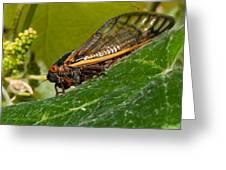 17 Year Cicada 3 Greeting Card