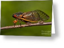 17-year Periodical Cicada I Greeting Card