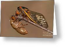 17-year Periodical Cicada II Greeting Card