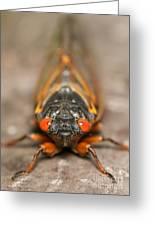 17-year Periodical Cicada IIi Greeting Card