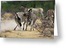 Zebre De Burchell Equus Burchelli Greeting Card