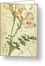 Botanical Print By Walter Hood Fitch 1817 – 1892 Greeting Card