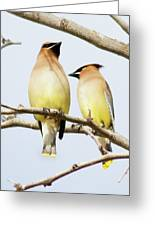 Birds Of The World Greeting Card