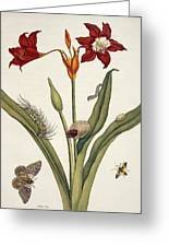 Insects Of Surinam Greeting Card