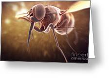 Tsetse Fly Greeting Card