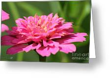 Zinnia From The Candy Mix Greeting Card