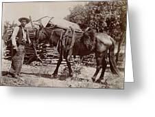 1900 Cowboy Greeting Card