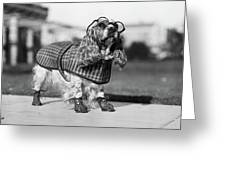 1930s Cocker Spaniel Wearing Glasses Greeting Card