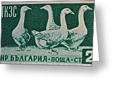 1955 Bulgarian Geese Stamp Greeting Card