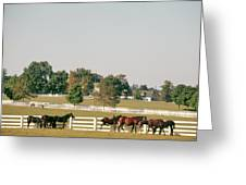 1990s Small Group Of Horses Greeting Card