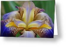 1st Iris Greeting Card