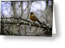 1st Robin Of Spring Greeting Card