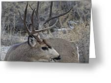 4x4 Mule Deer Buck Greeting Card