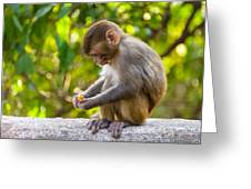 A Baby Macaque Eating An Orange Greeting Card
