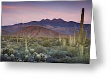 A Desert Sunset  Greeting Card