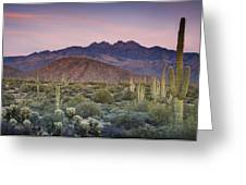 A Desert Sunset  Greeting Card