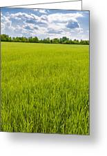 A Field Of Green Wheat Under A Cloudy Sky Greeting Card