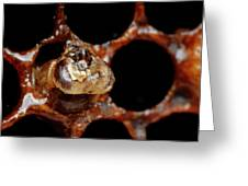 A Honeybee Hive After Colony Collapse Greeting Card
