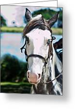 A Horse Is A Horse Of Course Greeting Card by Frank Feliciano
