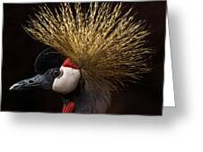 African Crowned Crane Greeting Card