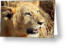 African Lion Cub Portrait Greeting Card