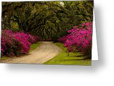 Afton Villa Drive Greeting Card