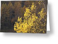 Alberi Greeting Card