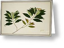 Album Of Drawings Of Plants Greeting Card