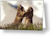 Alpine Marmot Greeting Card
