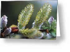 Alpine Wildflowers Greeting Card