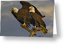 American Bald Eagle Pair  Greeting Card