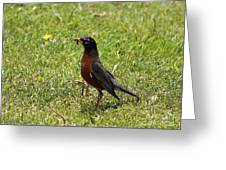 American Robin Gathering Worms Greeting Card
