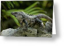 An Iguana Sunbathes In The Ancient Greeting Card
