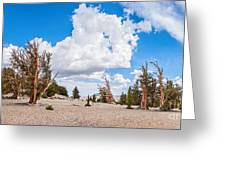 Ancient Panorama - Bristlecone Pine Forest Greeting Card