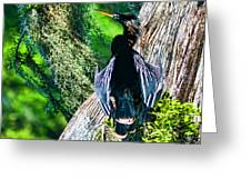 Anhinga On A Cyprus Greeting Card by Frank Feliciano