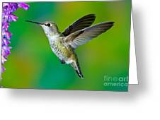 Annas Hummingbird Greeting Card