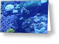 Aquariums Greeting Card