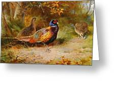 Autumn Covert Pheasants Greeting Card