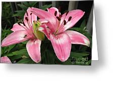 Asiatic Lily Named Vermeer Greeting Card