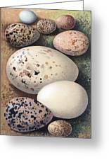 Assorted Birds Eggs, Historical Art Greeting Card