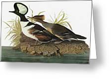 Audubon Merganser Greeting Card