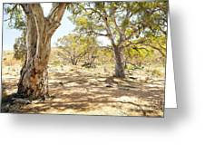 Australian Outback Oasis Greeting Card