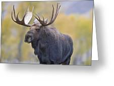 Autumn Bull Moose IIi Greeting Card