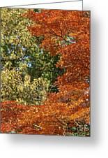 autumn colours in Bavaria Greeting Card